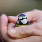 A bird in the hand ... by Ben Luck
