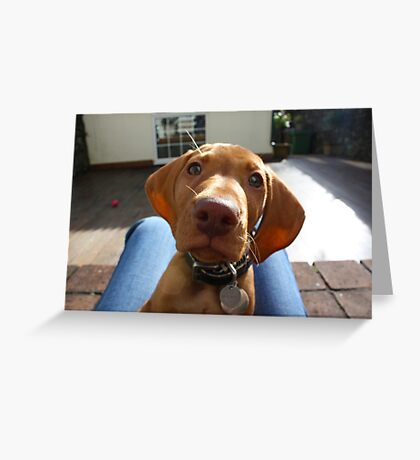 Semper the Vizsla Greeting Card