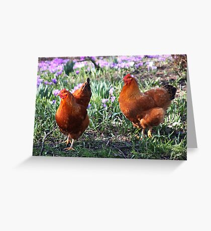 Happy Chickens Greeting Card