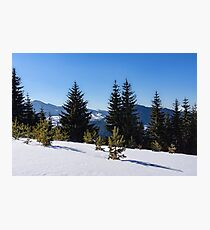 Little Pine Forest - Impressions of Mountains Photographic Print
