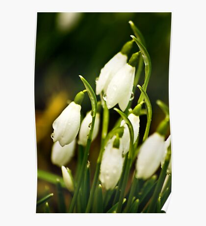 Snowdrops #2 Poster