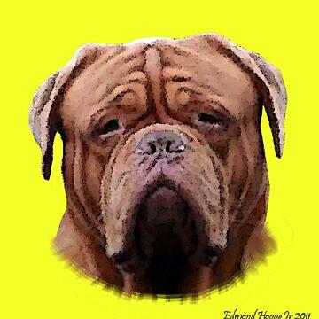 English Bulldog by EdmondHoggeJr