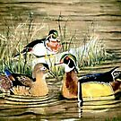 Duck Pond  by Scott  Nordstrom