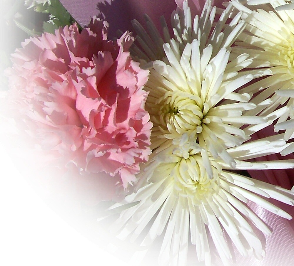 Pink carnation and white cactus mums by debkd