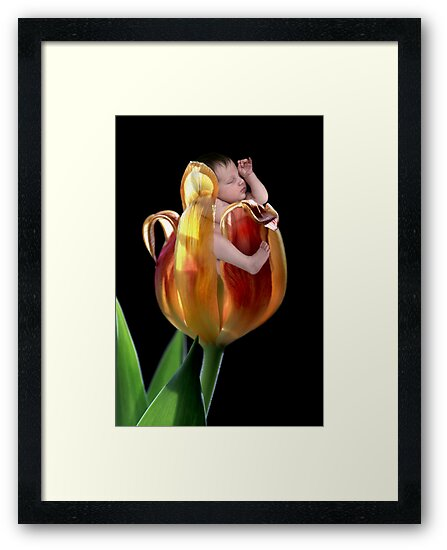 Tulip baby by Lyn Evans