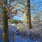 Snowy Sunrise by Eileen McVey