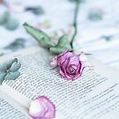 Still Life of Fading Rose on Book by Tamsyn Morgans