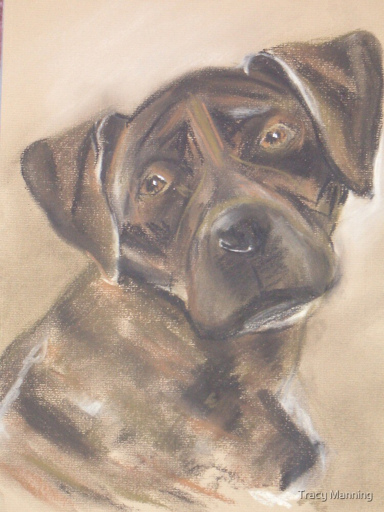 Cinder the Florida Cur by Tracy Manning