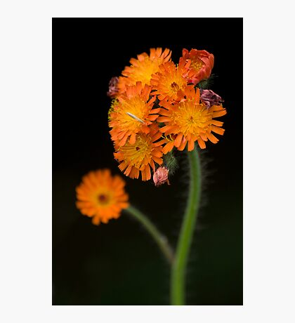 Orange Bouquet Photographic Print