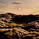 Morning Dunes by Greig Nicholson