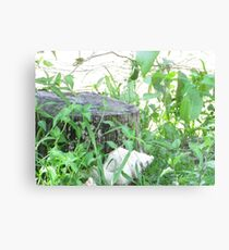Fence. Canvas Print