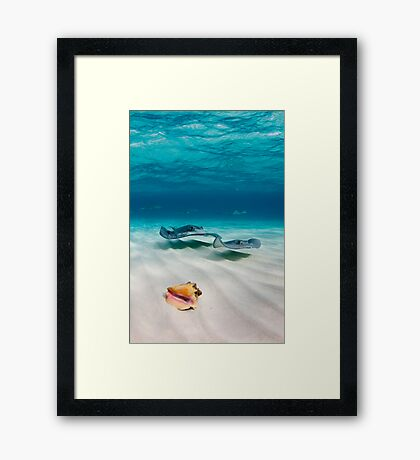 Two stingrays & a shell went into a sandbar... Framed Print