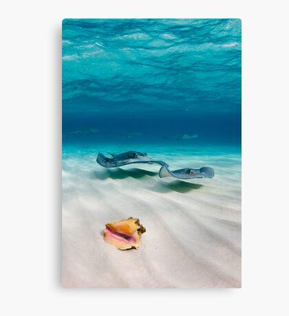Two stingrays & a shell went into a sandbar... Canvas Print