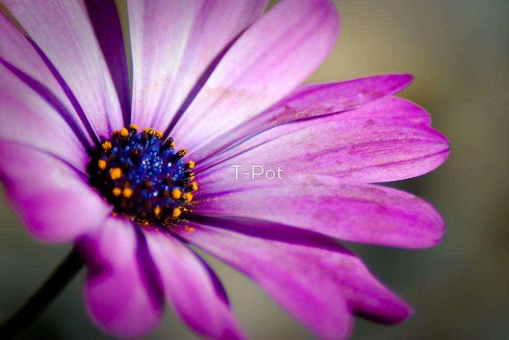 Pushing up daisy by T-Pot