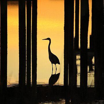 Silhouette Of A Bird by Cynthia48