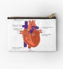 Diagramm des menschlichen Herzens Täschchen