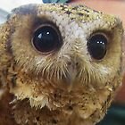 Up Close And Personal With An Owl by lezvee