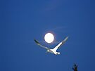 Moon and bird (Ganet) by Matthew Walmsley-Sims