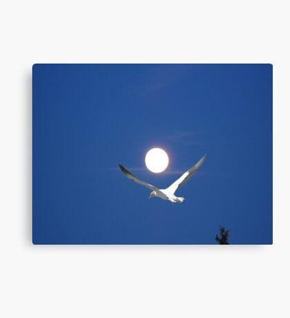 Moon and bird (Ganet) Canvas Print