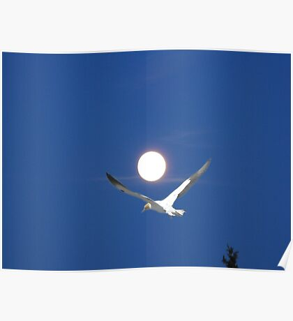 Moon and bird (Ganet) Poster