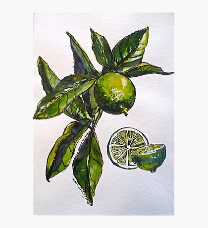 Limes. Pen and wash. 42x32cm. Photographic Print