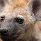 Fierce Hyena cub! by Sharon Bishop