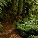 Fern Walk,Otway Ranges by Joe Mortelliti