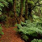 Lush Fern Walk,Otway Ranges by Joe Mortelliti