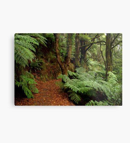 Lush Fern Walk,Otway Ranges Metal Print