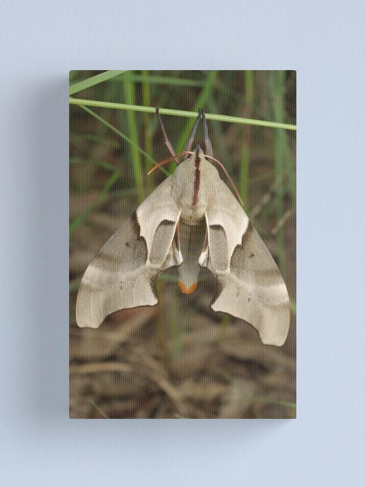 Alternate view of Moth Canvas Print