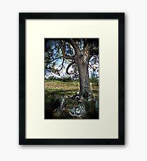 HDR Nature Framed Print