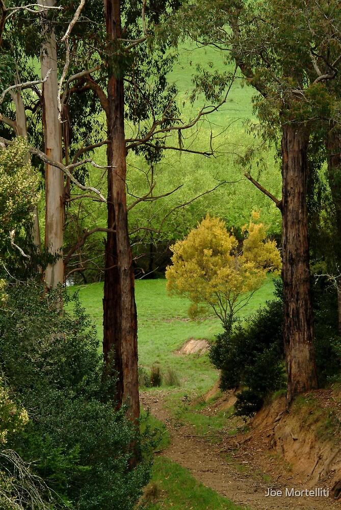 Otway Farm Lands by Joe Mortelliti