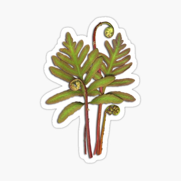 Sensitive Fern Sticker