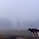 Lone Cow in Fog by Wayne King