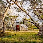 Wallace's Hut by Mieke Boynton