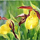 Yellow Lady's Slippers by Joan A Hamilton