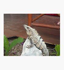 Iguana on rock in Playa del Carmen, Mexico Photographic Print