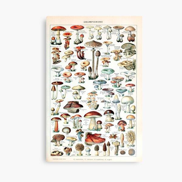 Adolphe Millot - Champignons pour tous - French vintage poster Canvas Print