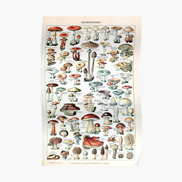 Adolphe Millot - Champignons pour tous - French vintage poster Poster