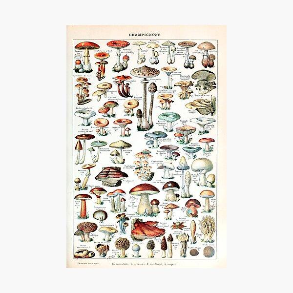 Adolphe Millot - Champignons pour tous - French vintage poster Photographic Print