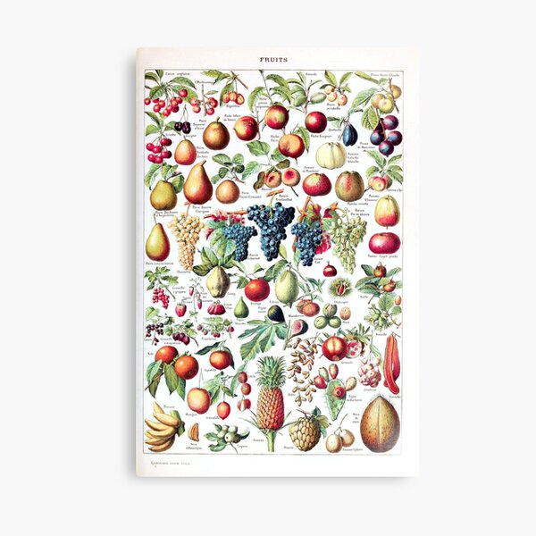 Adolphe Millot - Fruits pour tous - French vintage poster Canvas Print