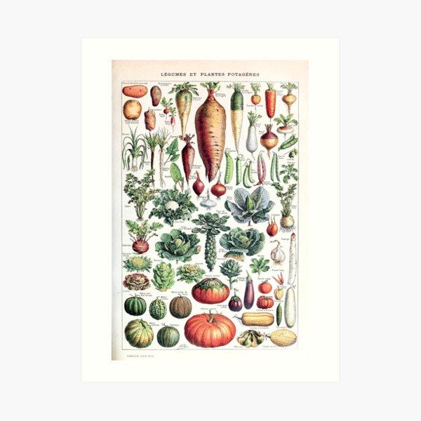Adolphe Millot - Légumes pour tous - French vintage poster Art Print