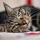 Cat selfie by GreyFeatherPhot