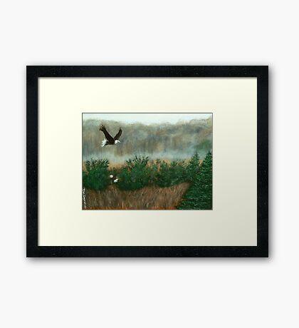Prarie du sac eagle Framed Print