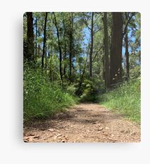 Australian Bush Walk Metal Print
