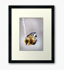 """Icicle Olympics"" Framed Print"
