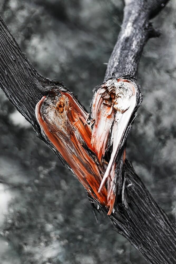 My Heart Broke by Elaine Teague