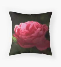Soft Red Rose In The Evening Light Throw Pillow