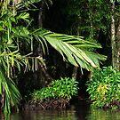 Tortuguero Waterways #3 by Christopher Cullen