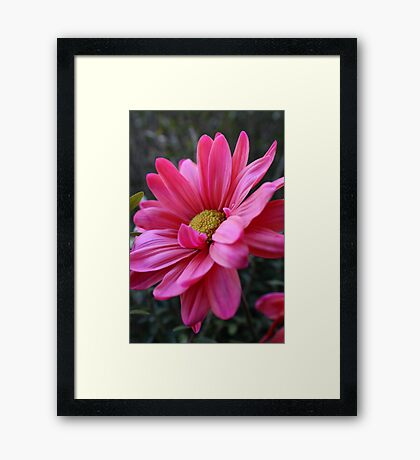 Hot Pink Lover Framed Print